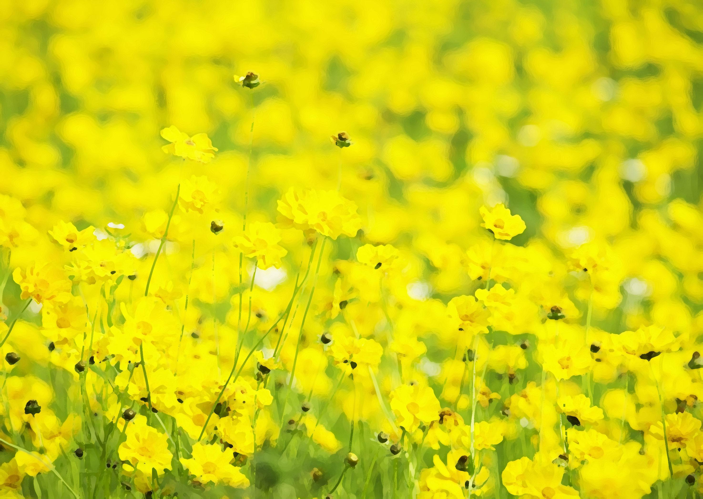 黄色の希望